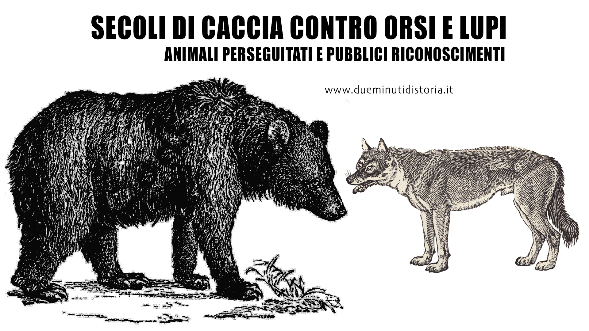 Secoli di caccia contro orsi e lupi